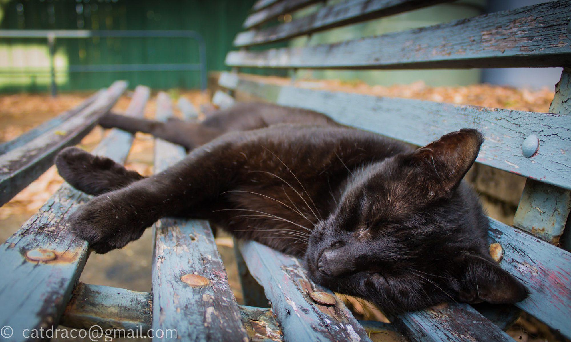 Cat Milton